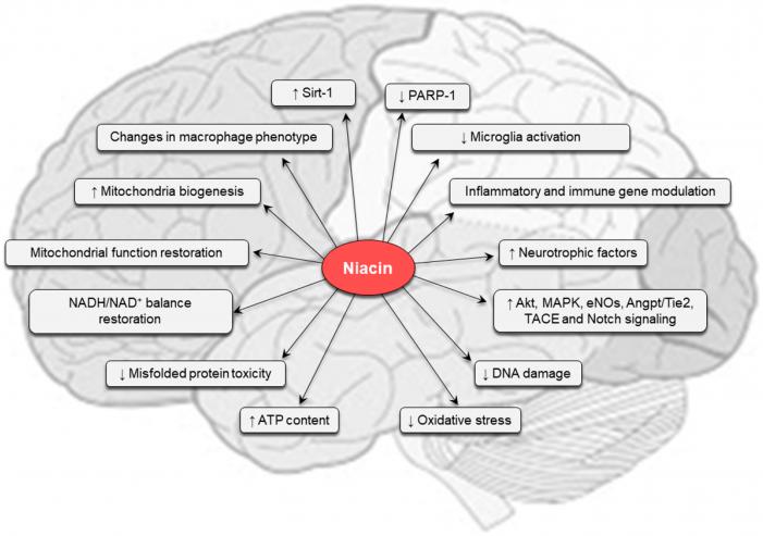 The Key Benefits of Niacin