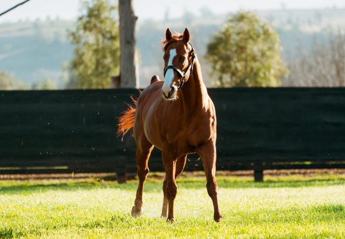 Justify Weanlings Dominate at Keeneland November